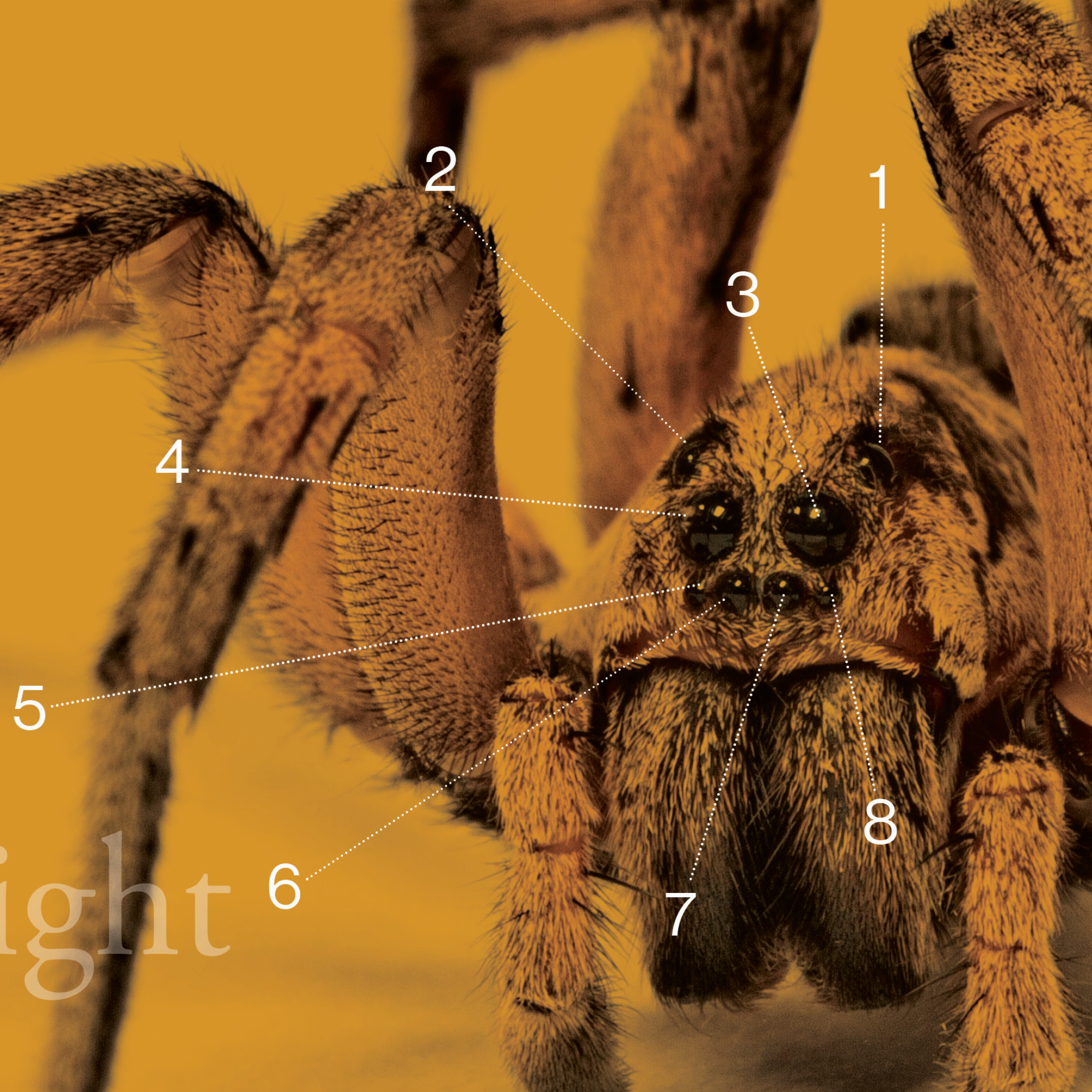 entomologysquare.jpg