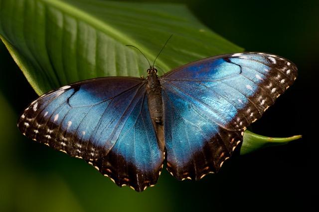 butterfly copy.jpeg
