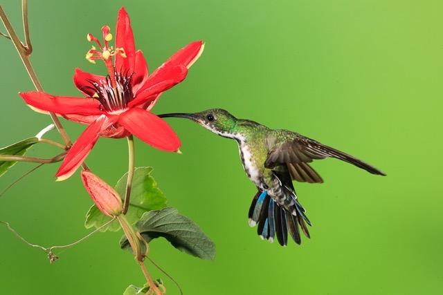 humming bird 2 copy.jpeg