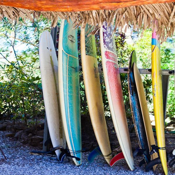 surfboards upright.jpg