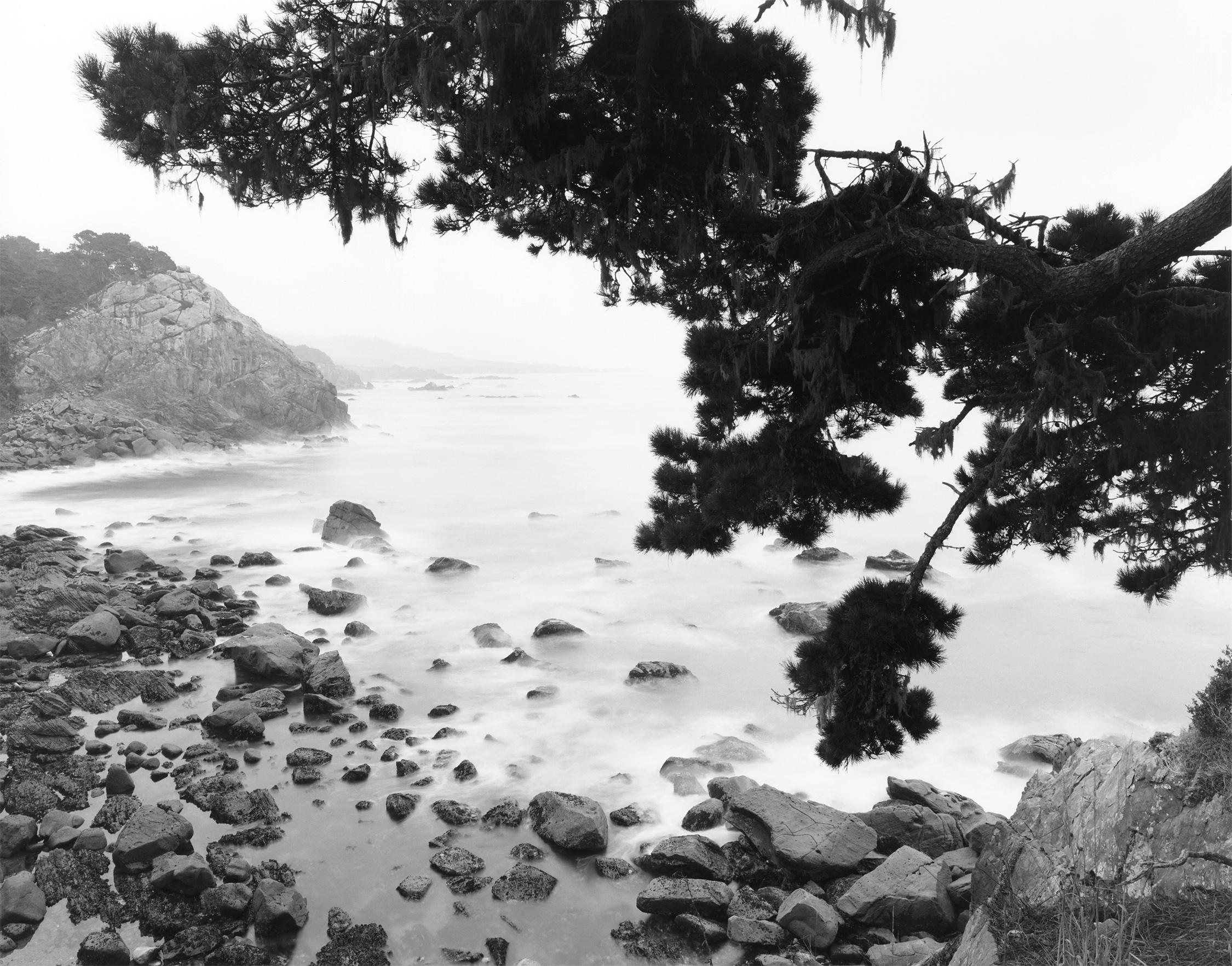 Salt Point #8 California
