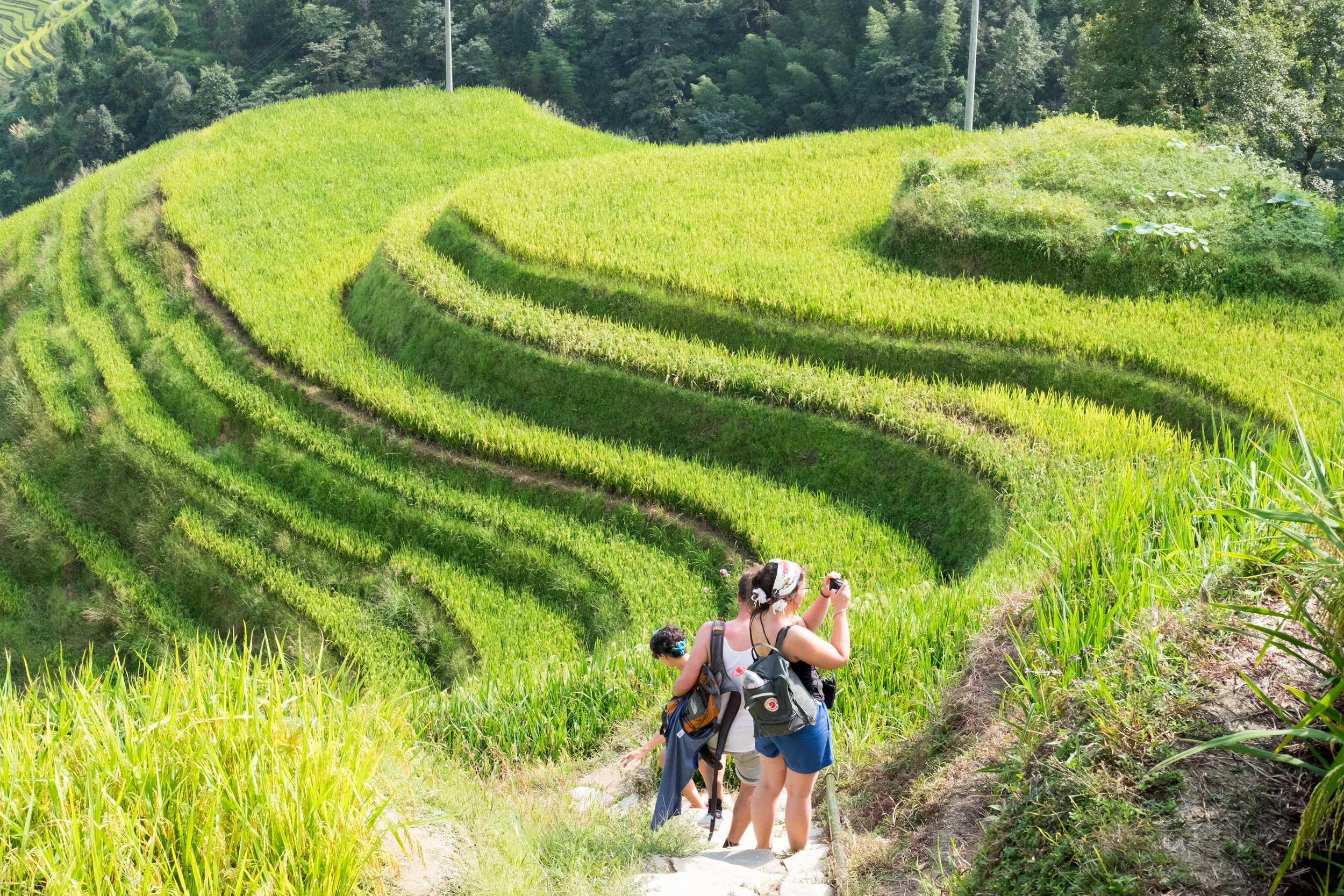 We climbed the rice terraces with a group of friends