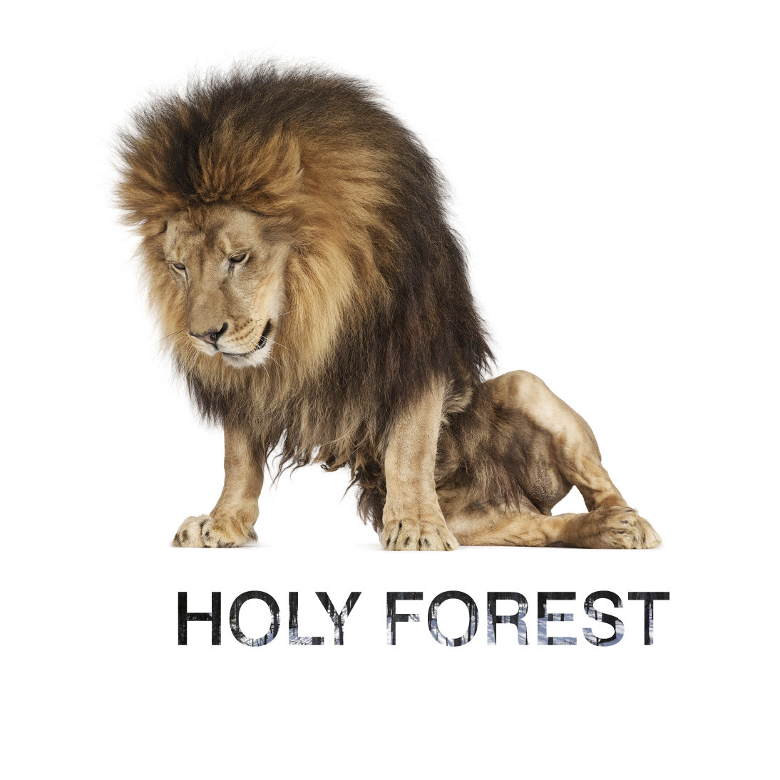 holy_forest_album.jpg