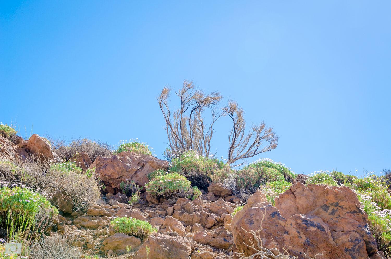 Une végétation coriace