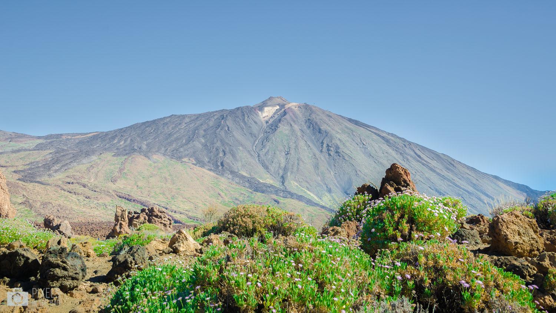 Présence du vert dans les sombres couleurs de la palette volcanique