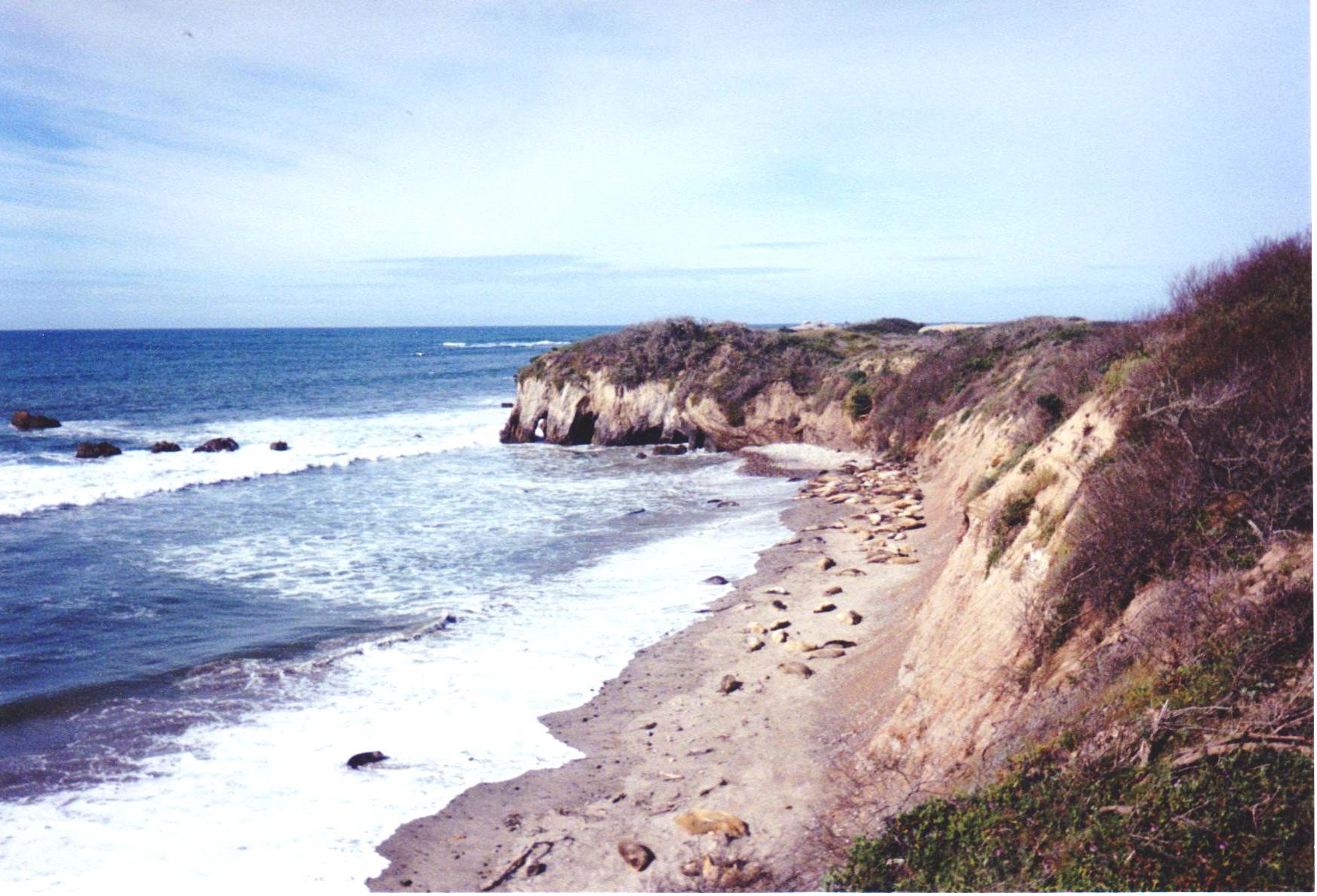Beach with Seals Spring Break Road Trip.jpg
