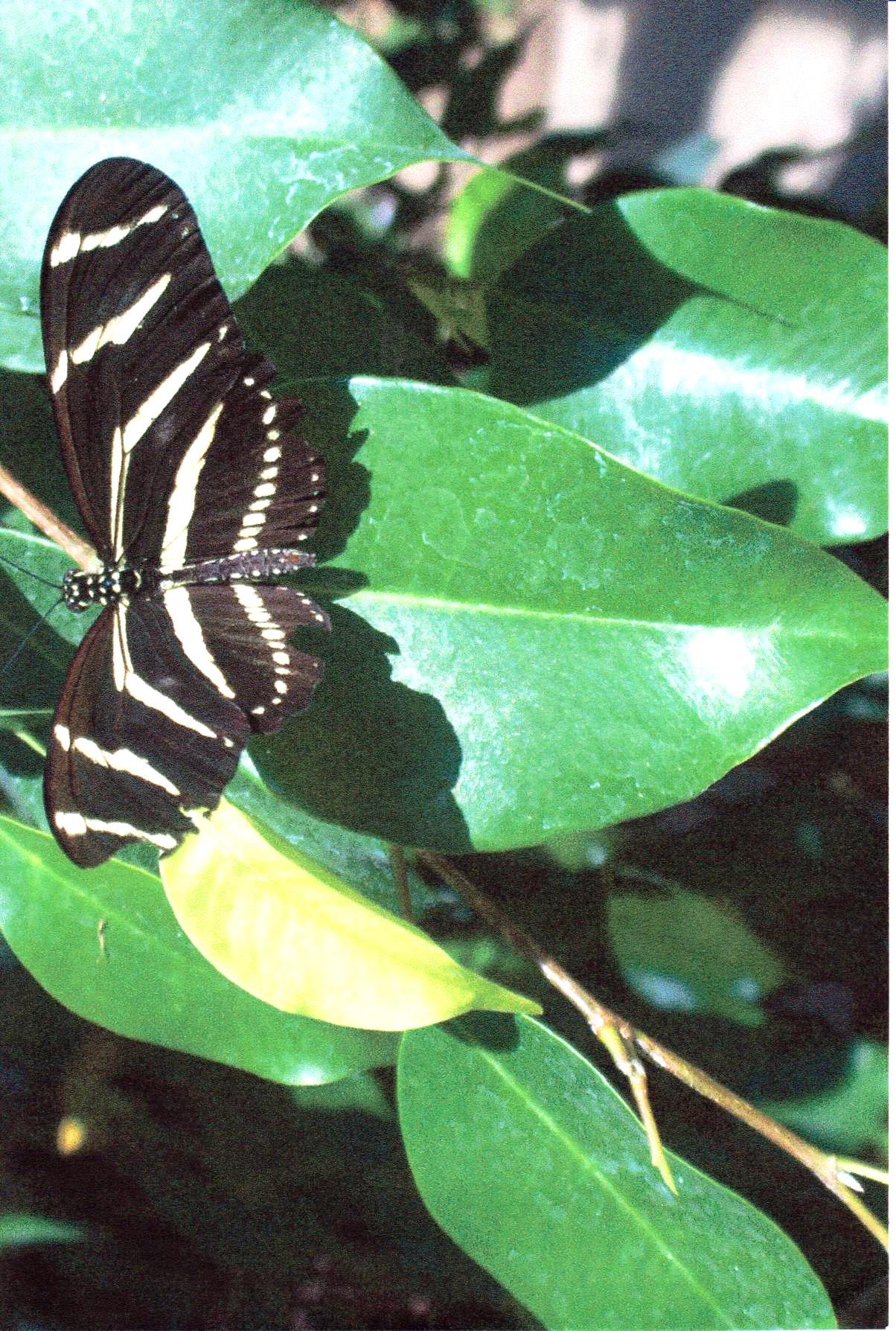 Butterfly Hoagle Zoo.jpg