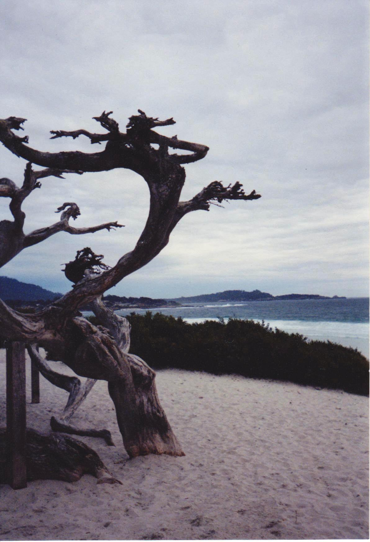 Dead tree and beach Spring Break Road Trip.jpg