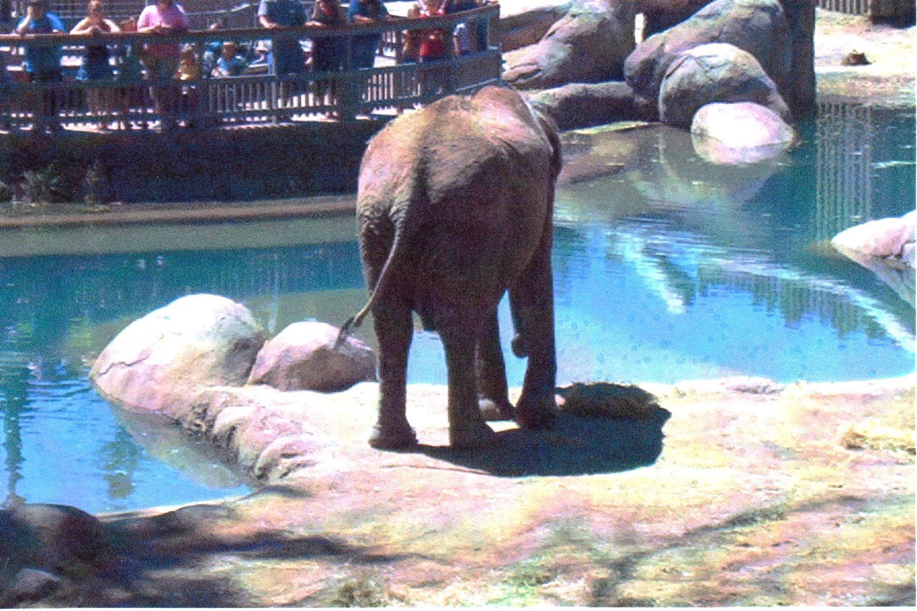 Elephant ass at zoo 2007ish.jpg