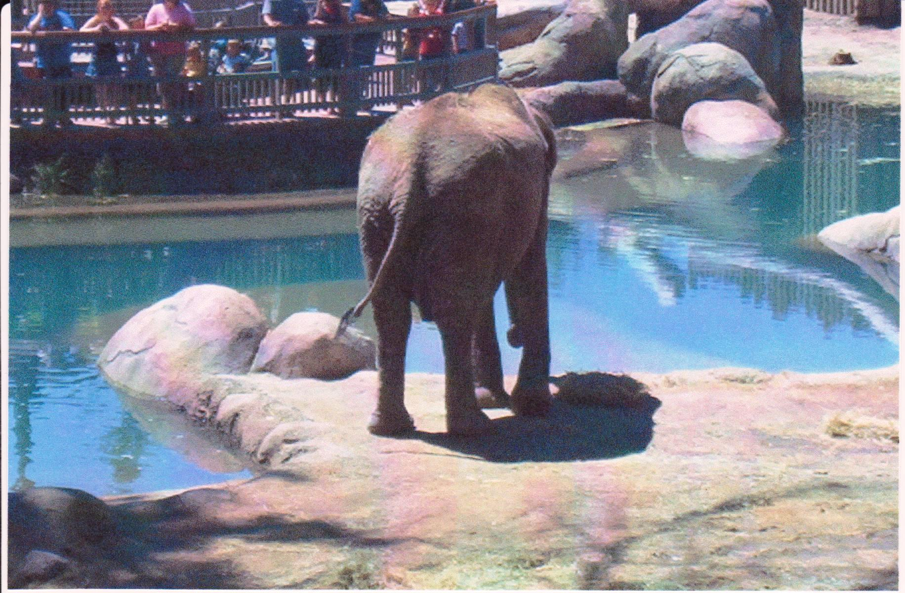 Elephant Hoagle Zoo.jpg