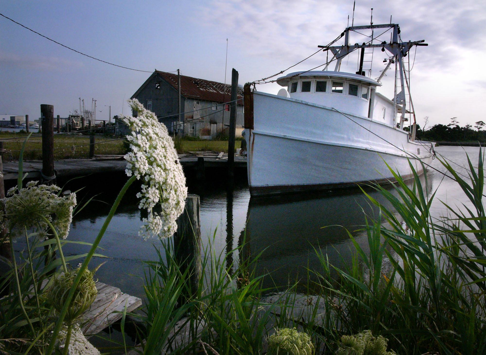 Quiet Harbor.jpg