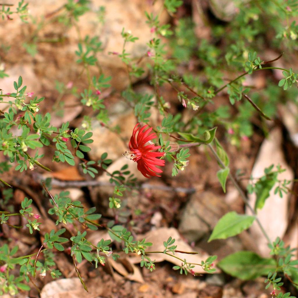 1 cabin flower 3 sq.jpg