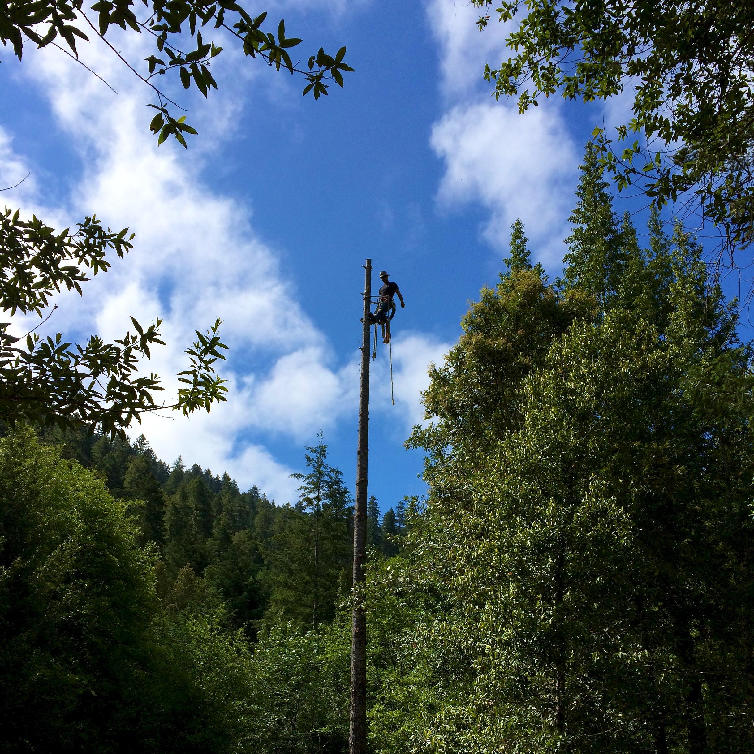 1 cabin trees 2.jpg