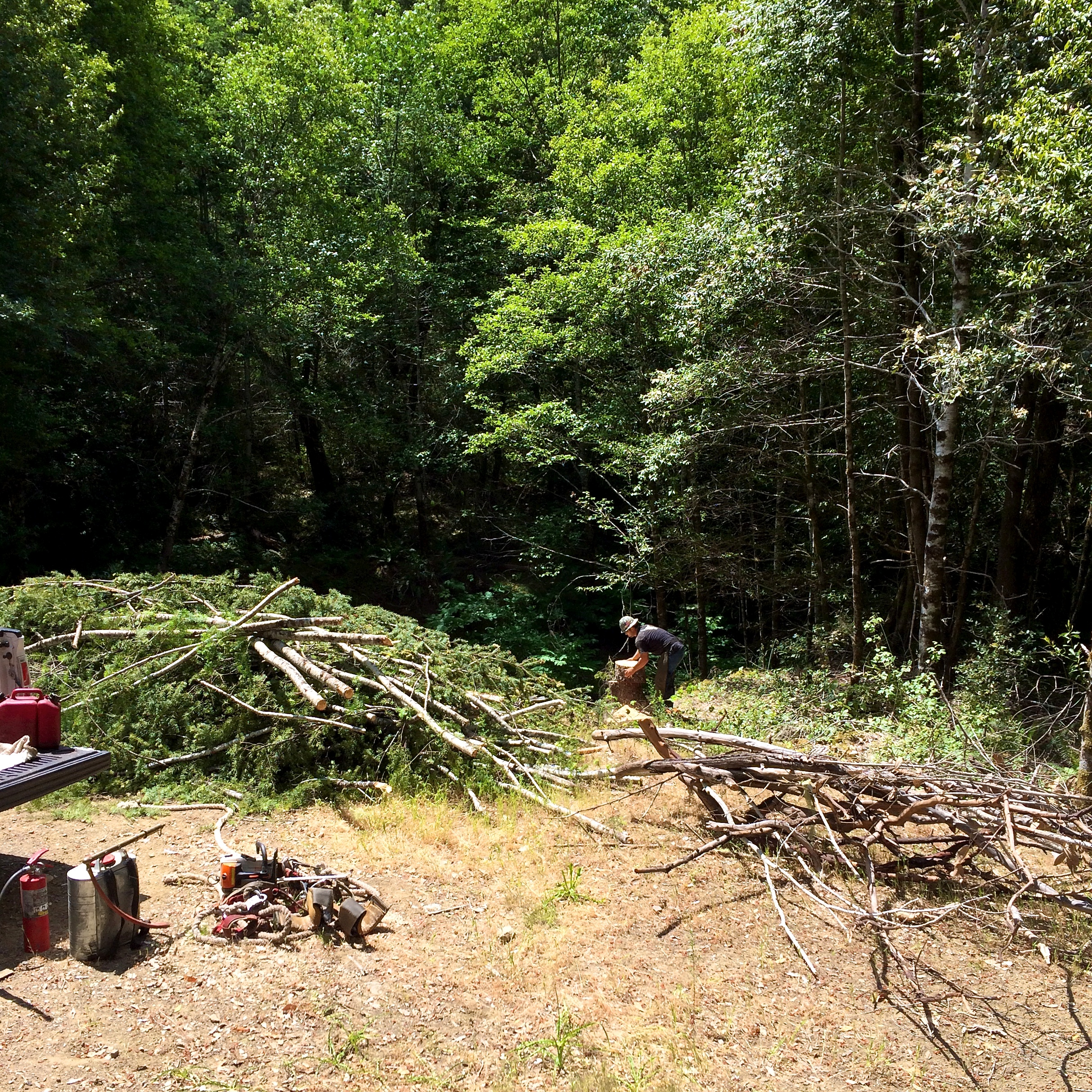 1 cabin trees 6 (1).jpg