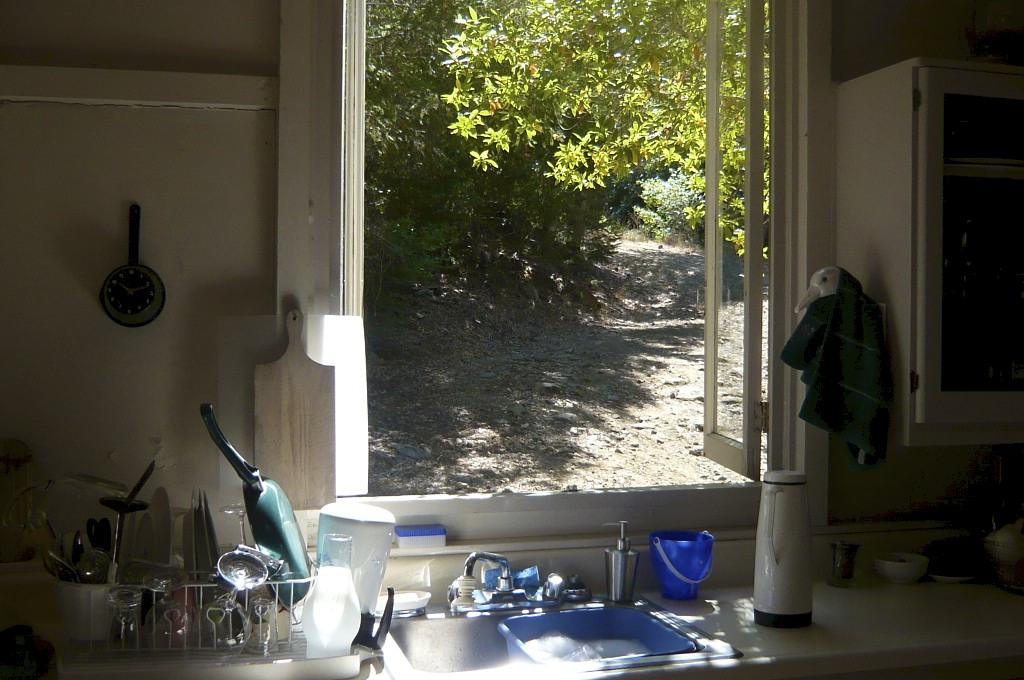 A bay tree outside the kitchen window provides constant inspiration.