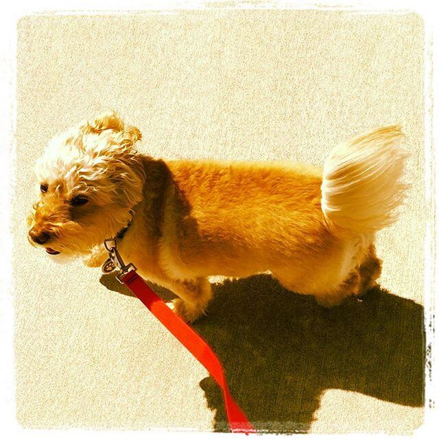 Hoboken Dog Walking Rates