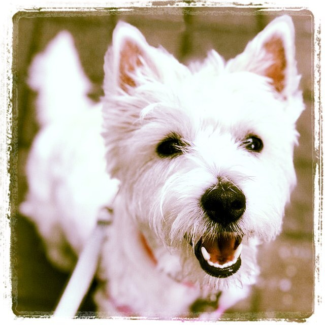 Hoboken Dog Walker