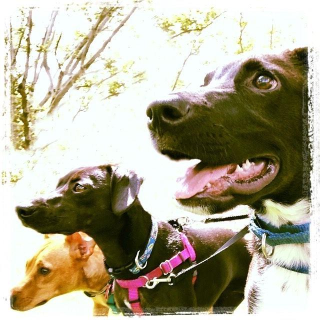 Dog Walker Hoboken