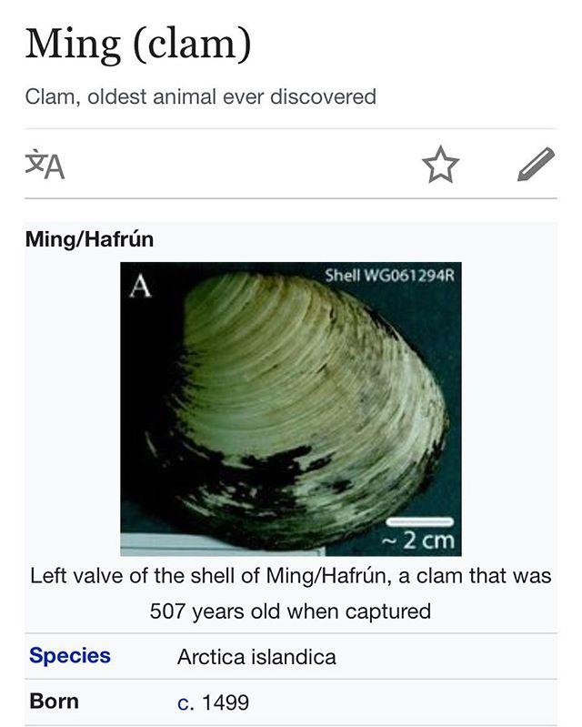 Born 1499