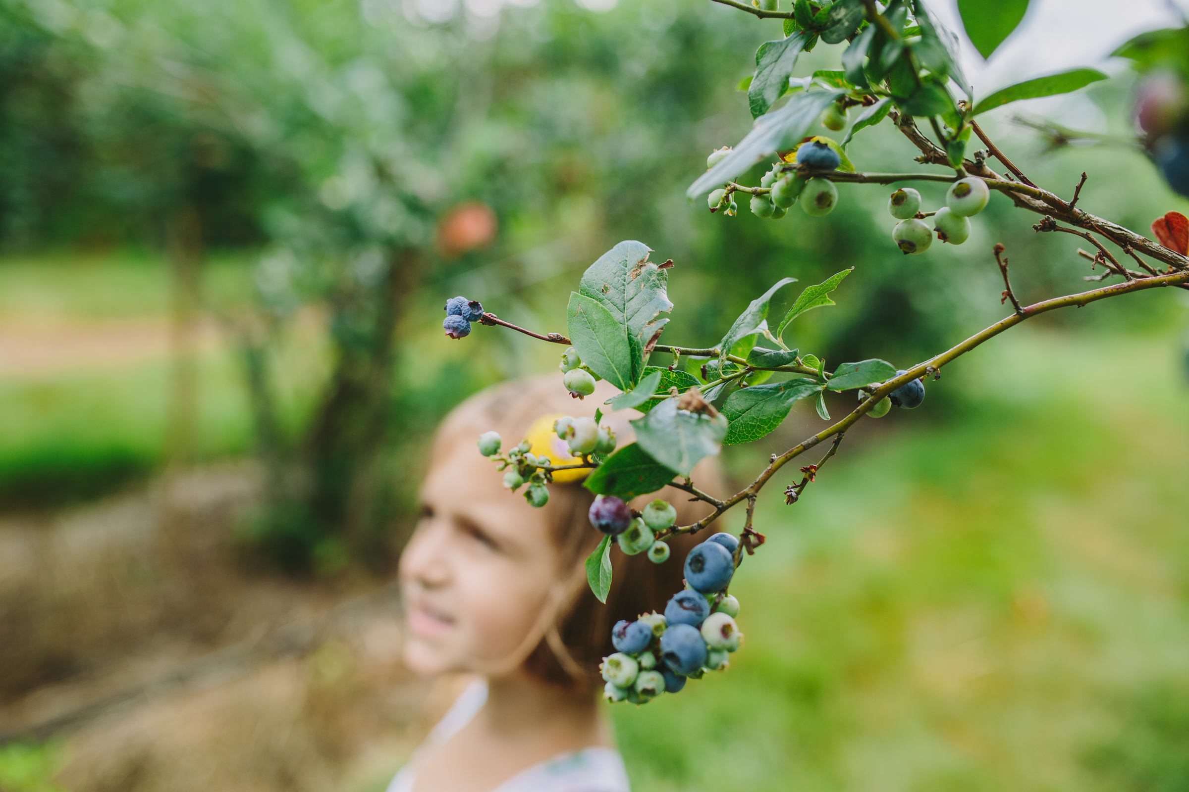 20160719_SheaBlueberryPicking-51.jpg