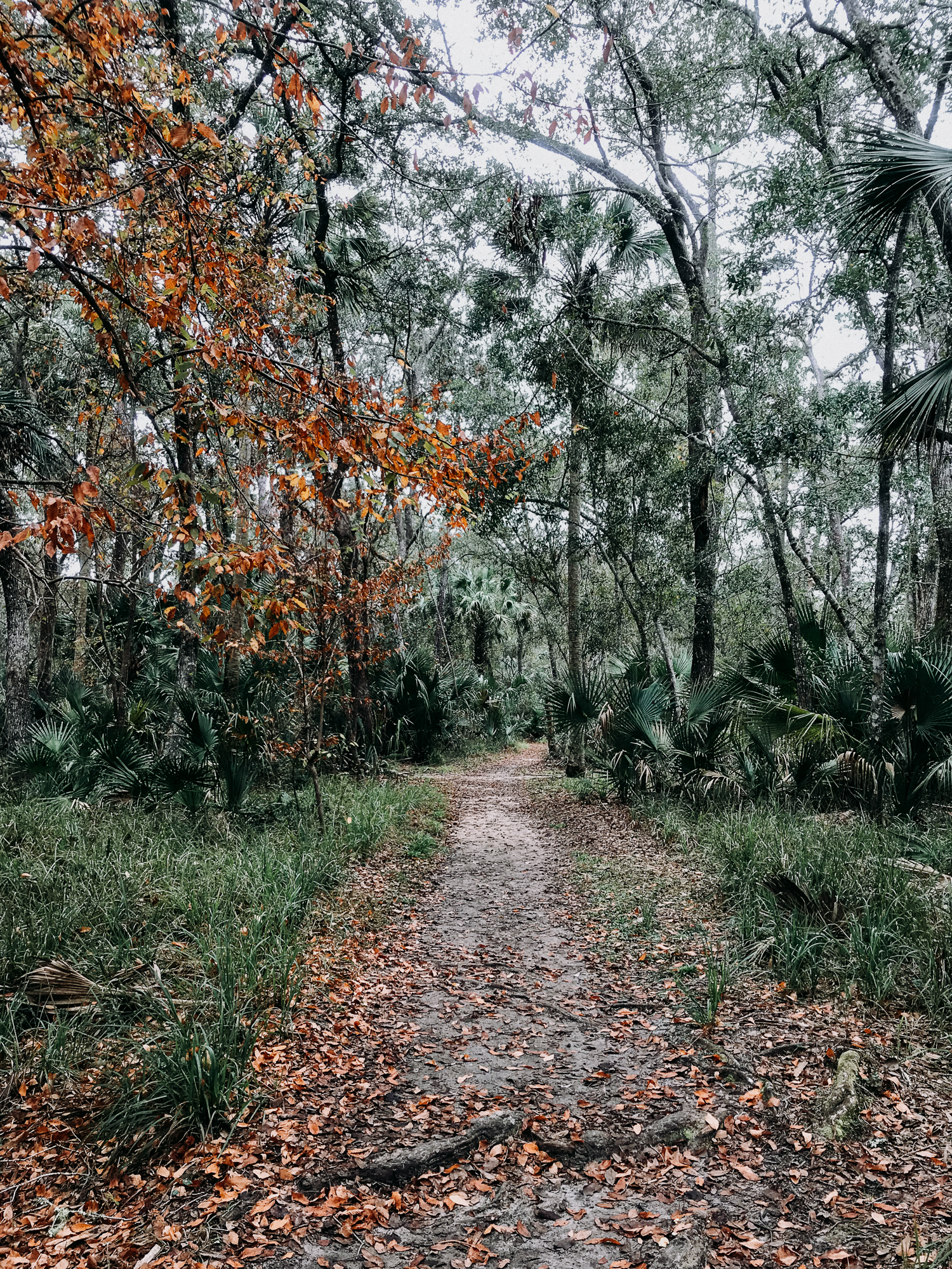 From-Coast-to-Coast-Camping-Juniper-Springs-ocala-national-forest-17-.jpg