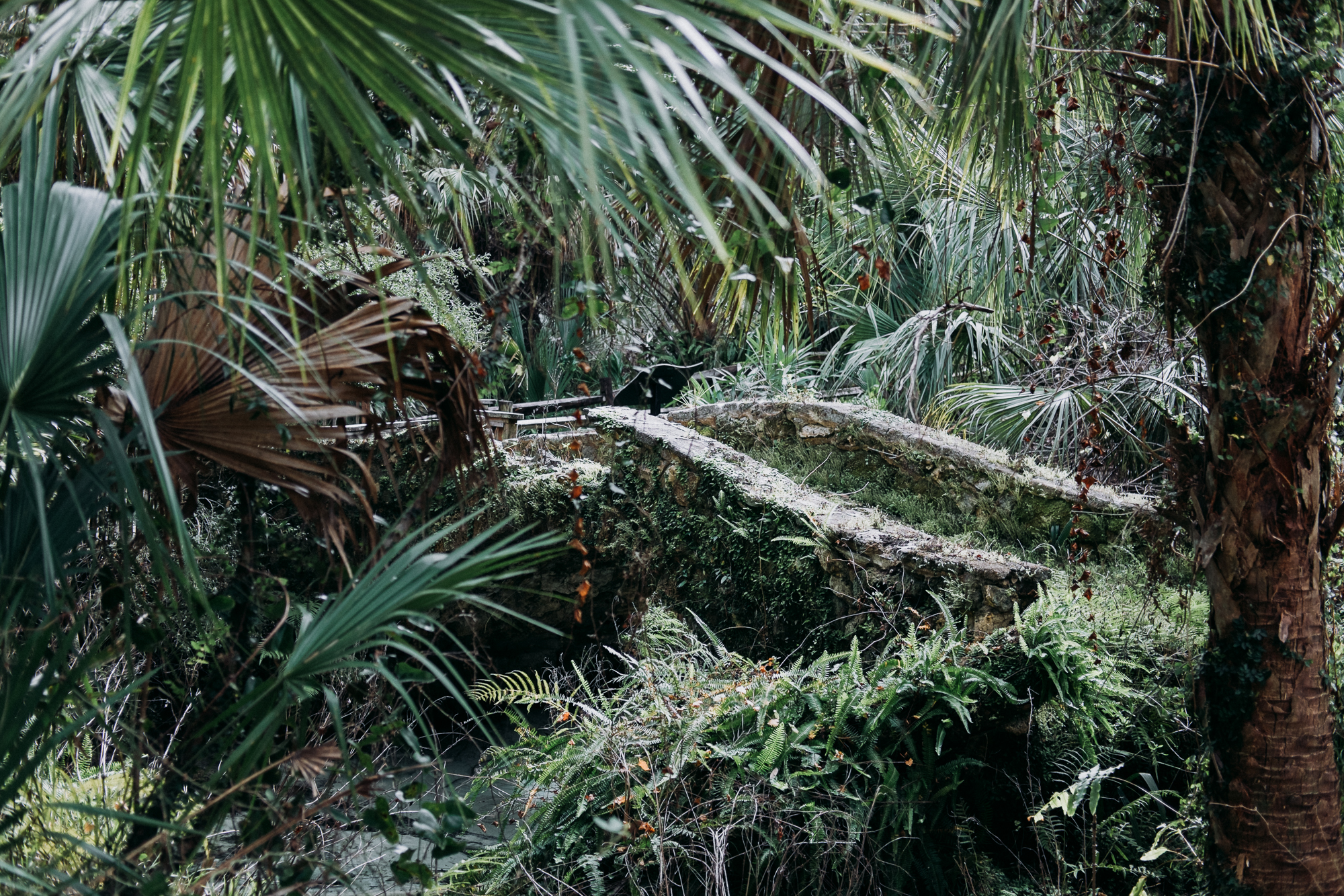 From-Coast-to-Coast-Camping-Juniper-Springs-ocala-national-forest-27-2658.jpg