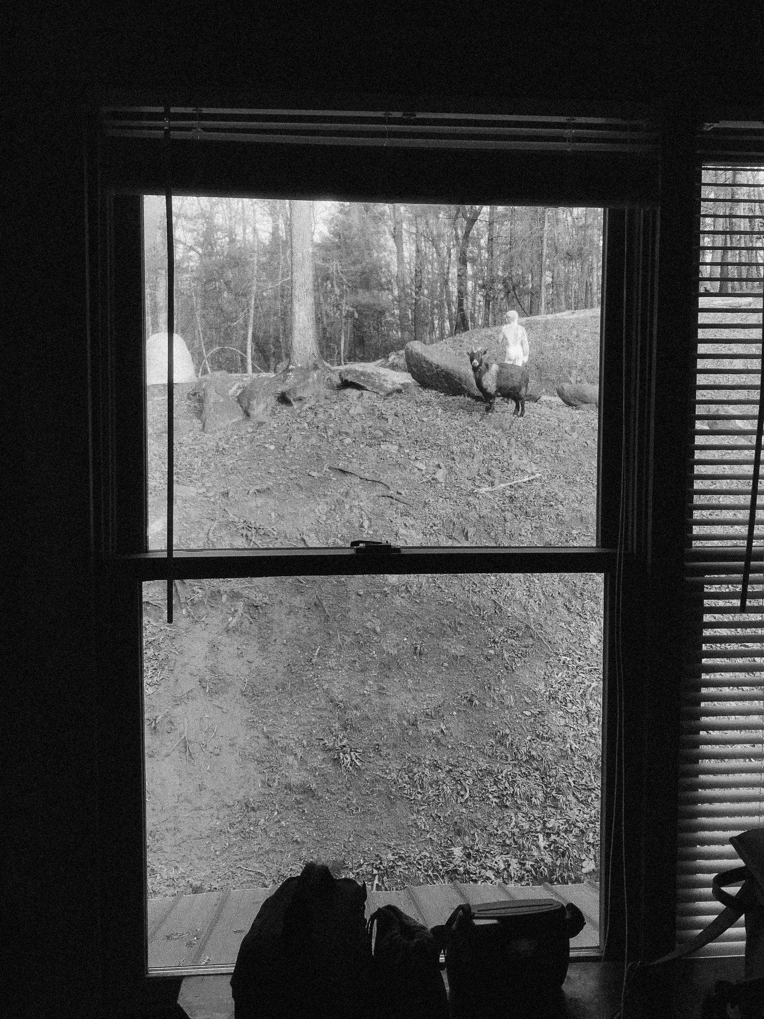 When we woke up the first morning, we opened the window to see the goat staring in at us (probably waiting for treats).