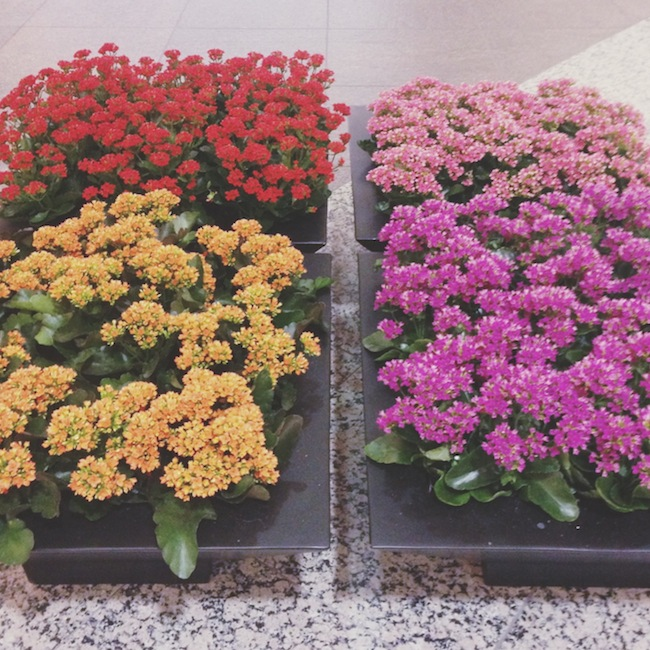 spring_flowers_minneapolis_downtown_zipped_blog.JPG