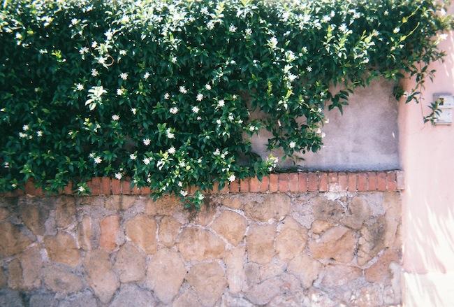 chelsea+zipped+truelane+blog+rome+italy+disposable+camera+prints11.jpg