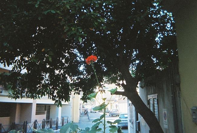 chelsea+zipped+truelane+blog+rome+italy+disposable+camera+prints13.jpg