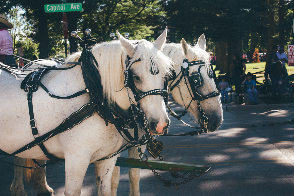 Cheyenne Frontier Days parade horses via truelane.png