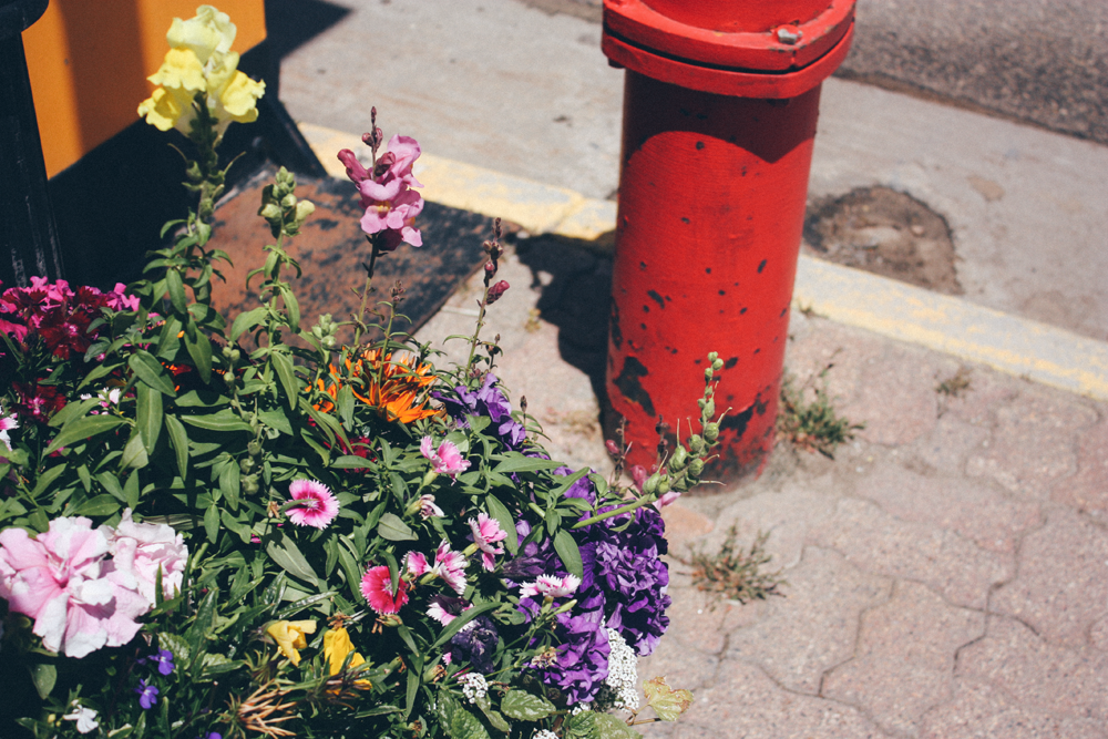 flowers in Leadville, CO via truelane.png