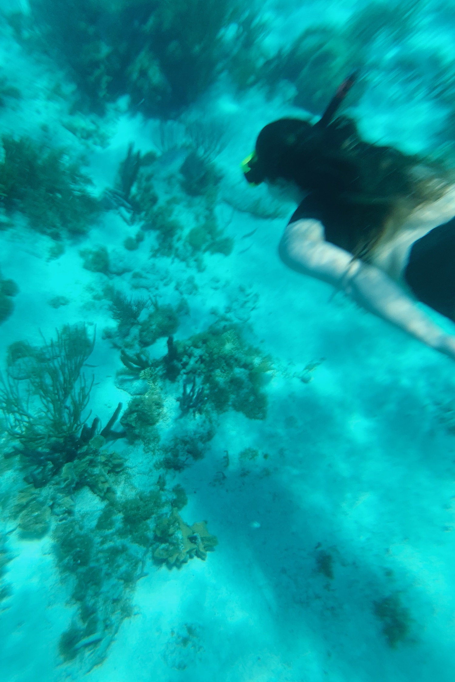 Stingray Encounter & Snorkel in Grand Cayman with Princess Cruises | truelane