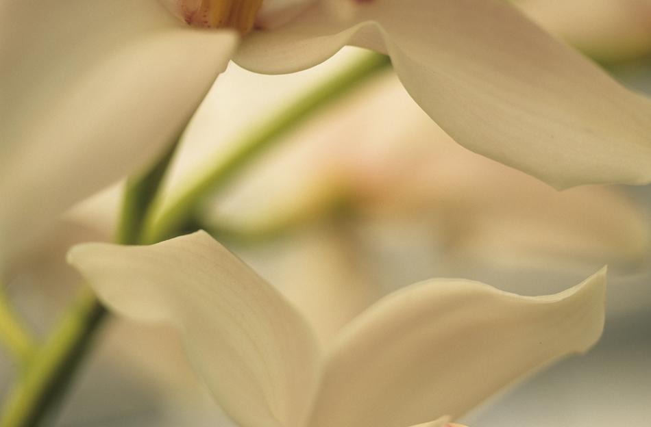 petals_950.jpg