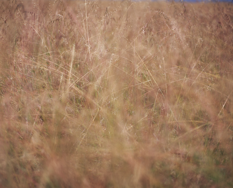 UNTITLED 2 GRASSES_f_950.jpg