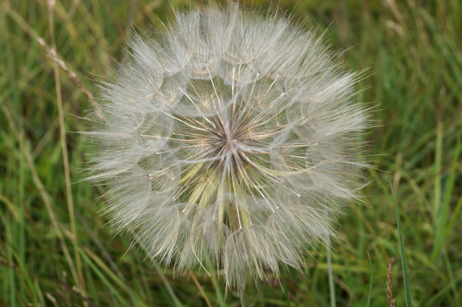 Just a close up of a dandelion? Or is there more?