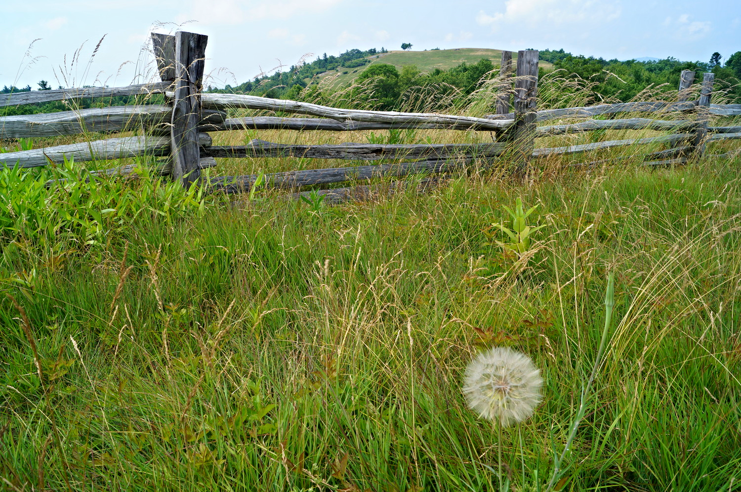 A single Giant Fluffy Dandelion. Where is it? Why is it the only one? A dramatic picture tells a story, and draws the viewer into it.