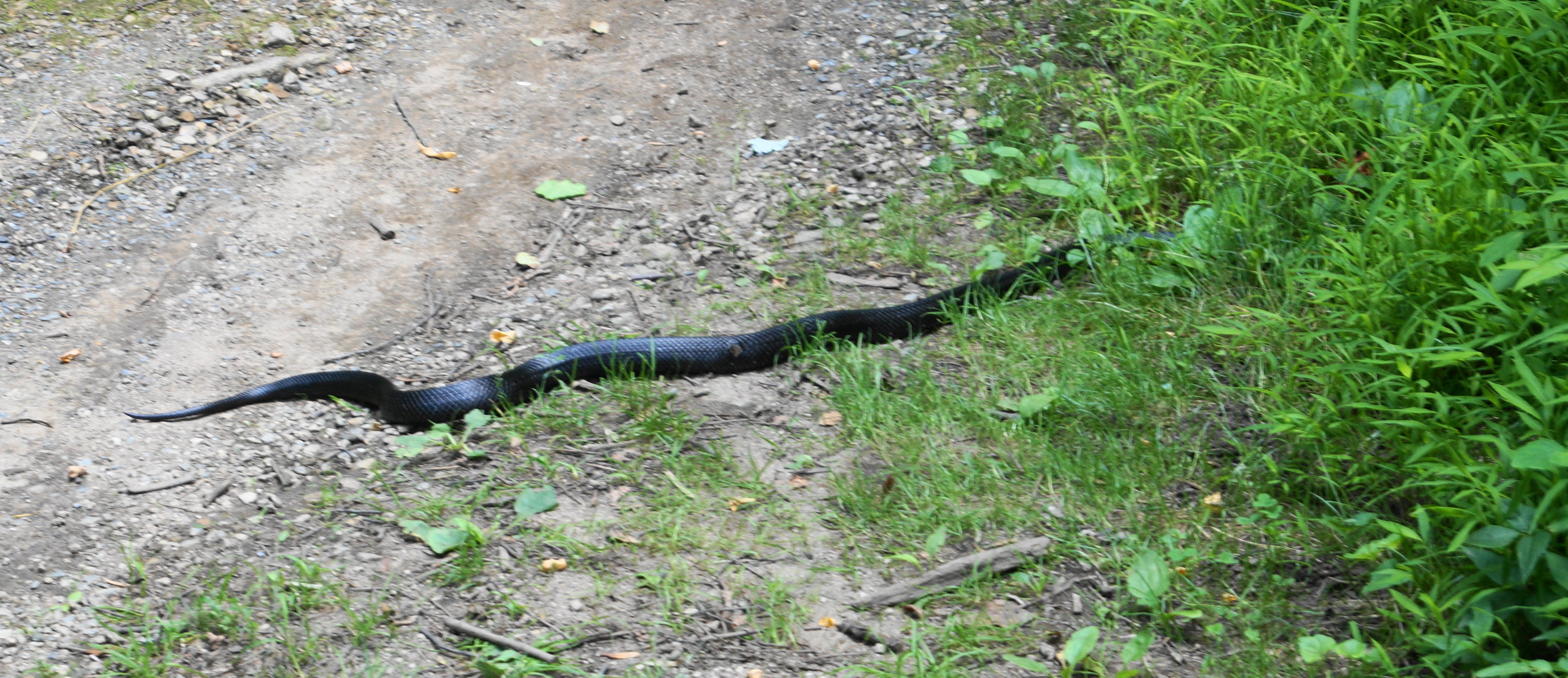 Tom, Jeri and the boys went ahead of us. Diane and myself were greeted by this creature crossing our path.
