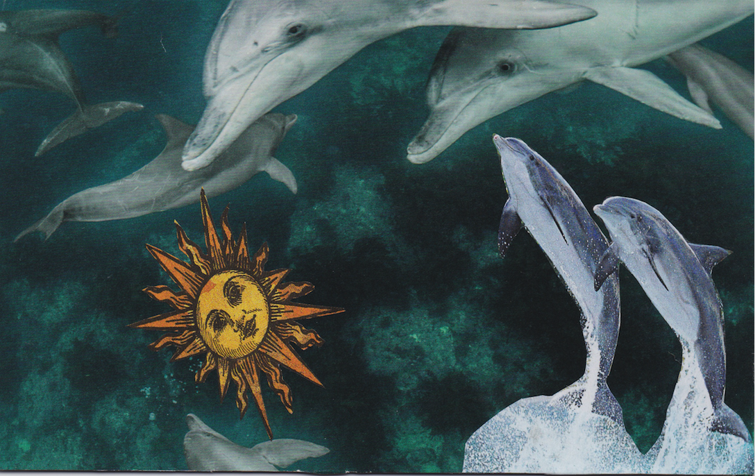 Companion Card: Dolphin for the Throat Chakra