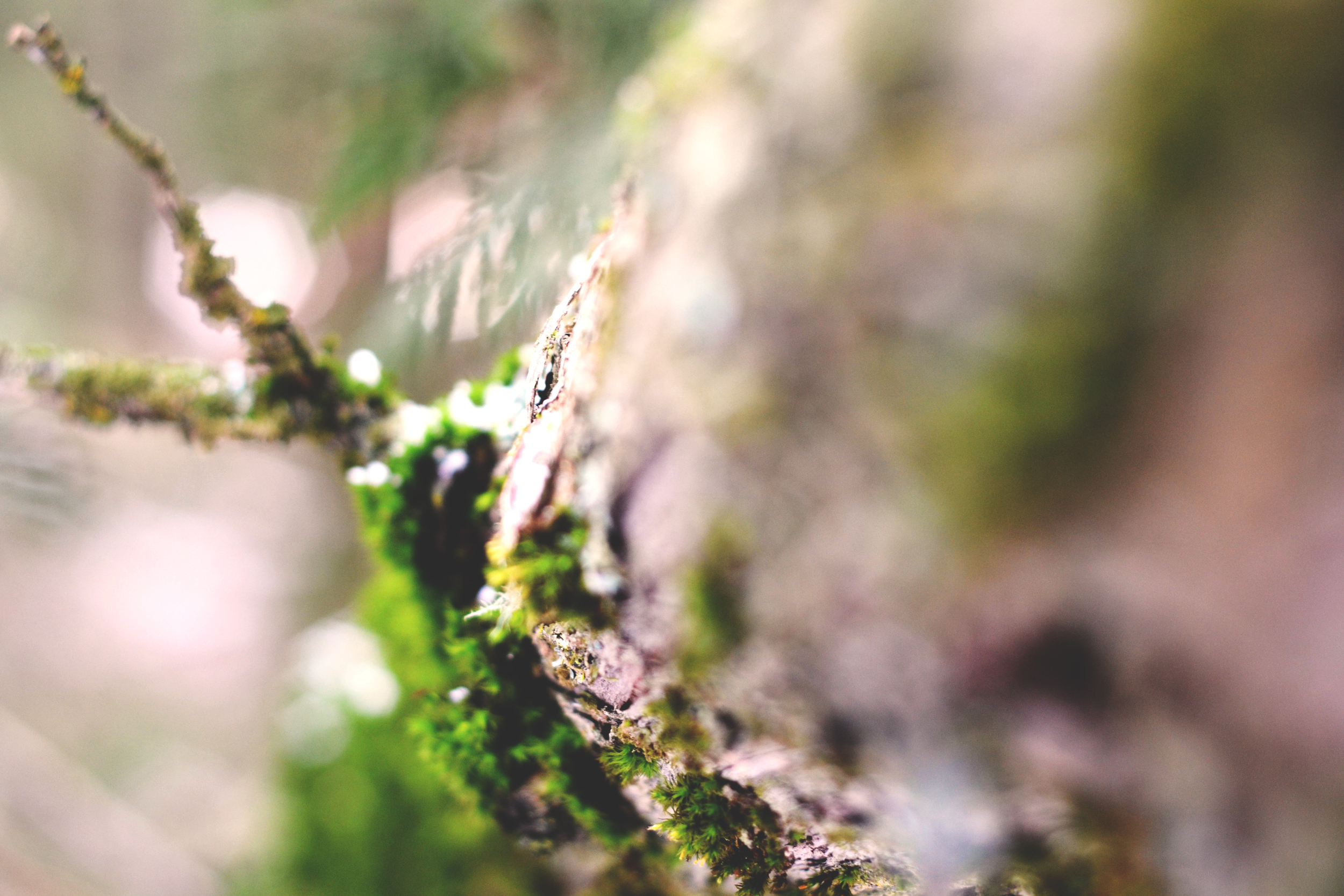 Focus | Moscow Mountain, Moscow, IDAHO | All Rights Reserved Heather Woolery 2016