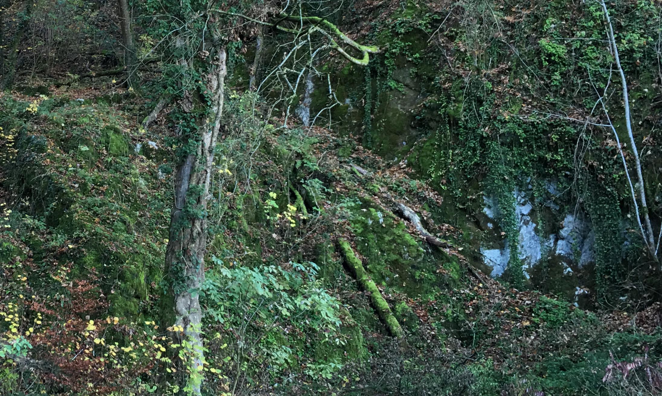 Ein moosbehangener Felsen oberhalb Ettingen.