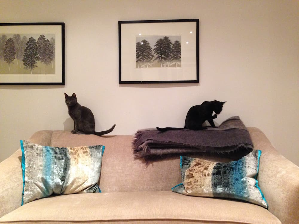 Pets on their petsit with their long-term house sitter in London