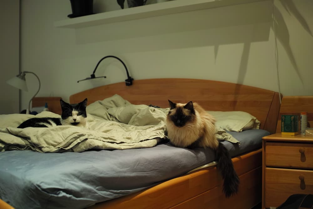 Long-term house sitter and pet sitter in central London