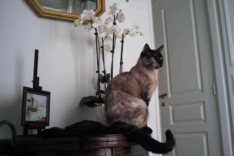 Anaïs, 1ème, Paris