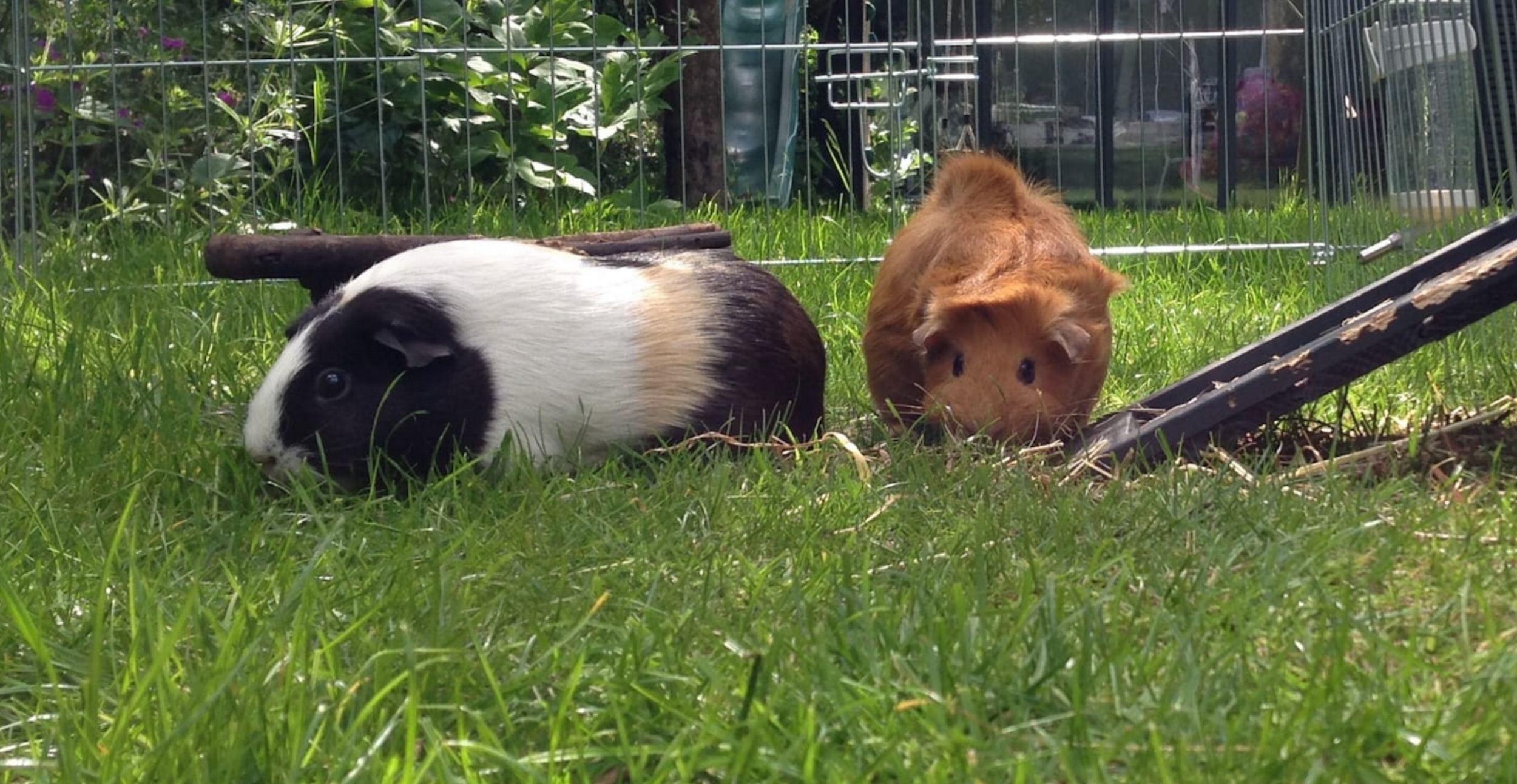 Coco & Ginger, Kensal Rise