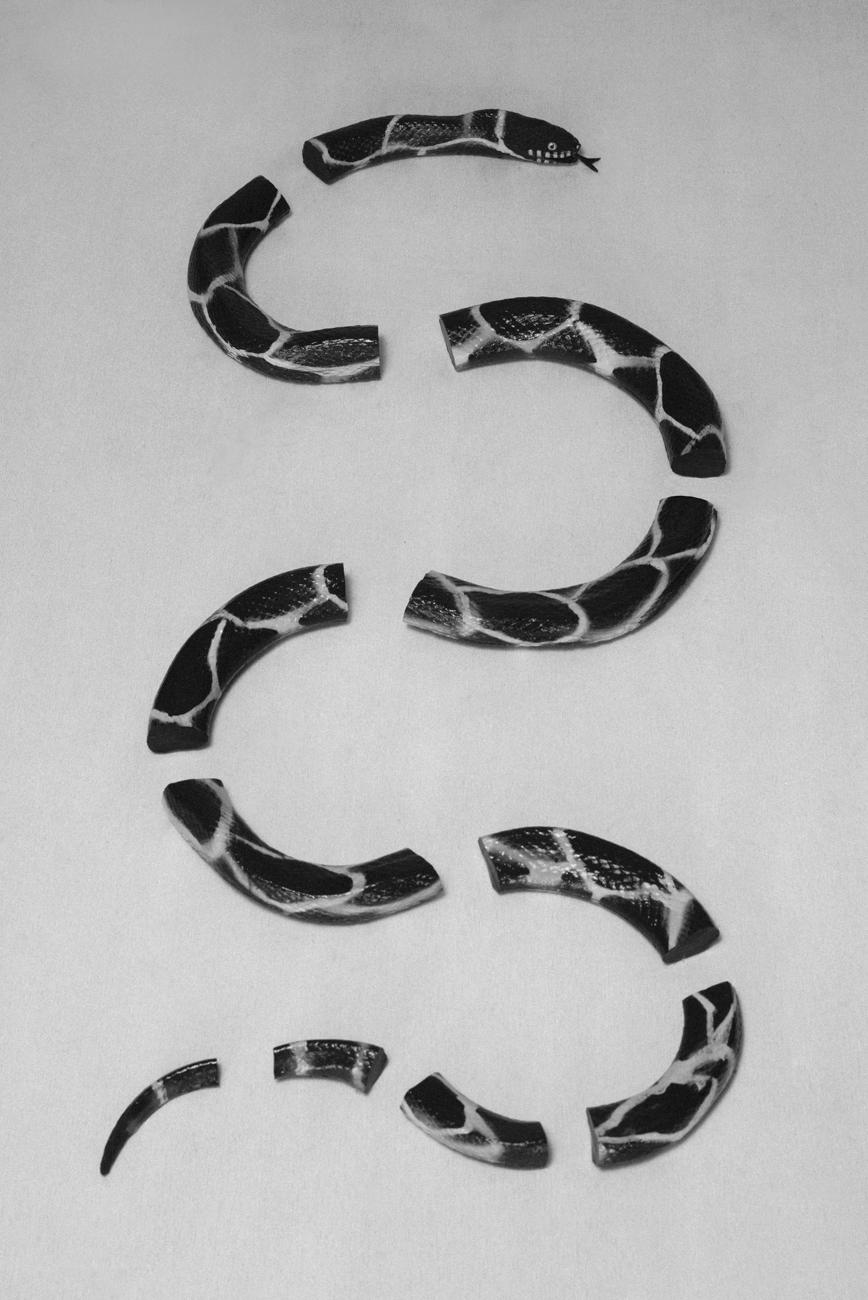 Claudio-Majorana-Snake-A.jpg