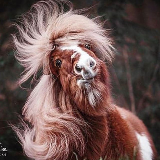 This is 110% my hair right now. I may look slightly less like a pony mixed with Alf, but that's my hair. 🐴 #winterhair #dryhair #dryfrizzyhair #fuckfebruary