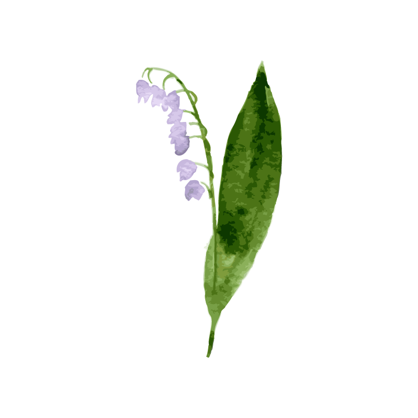 bellflower-01.png