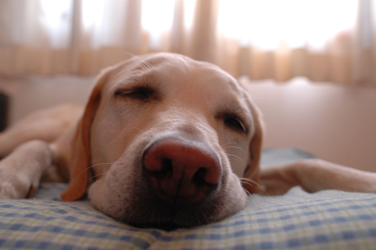 1280px-Dog.in.sleep.jpg