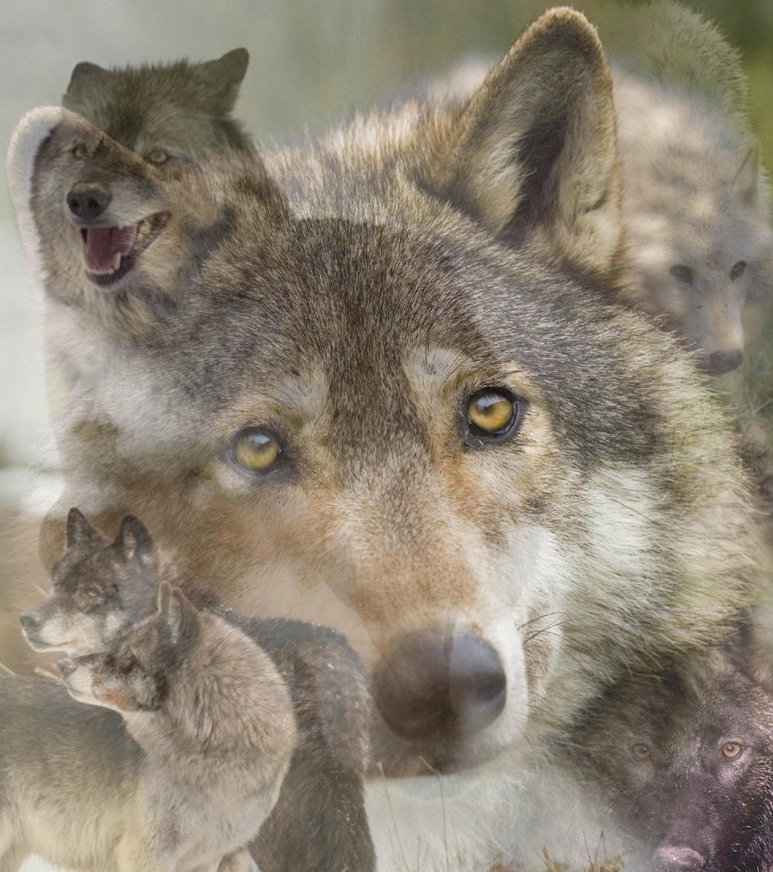 Lone-Wolf-Image.jpg